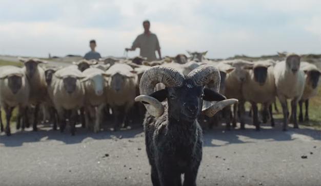 """Un adorable carnero coge la vida por los cuernos en este """"cornudo"""" spot de Volkswagen"""