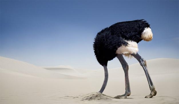 El e-commerce esconde la cabeza como el avestruz ante la llegada del nuevo RGPD