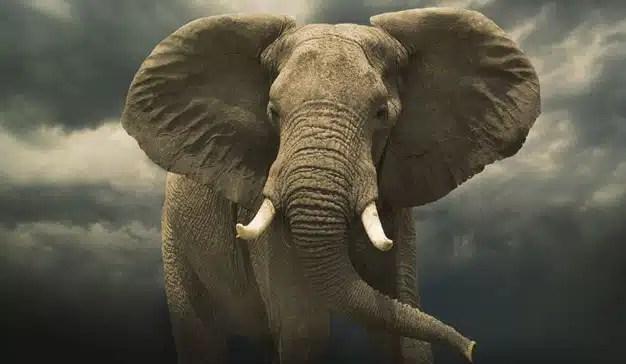El Corte Inglés, el elefante que quiere ser liebre