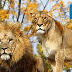 LinkedIn-LIONs_-Should-you-be-One-
