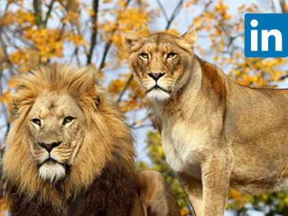 LinkedIn LIONs: Should you be One ?