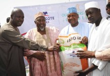 Dangote Sets to Introduce Rice into the Nigerian Market -marketingspace.com.ng