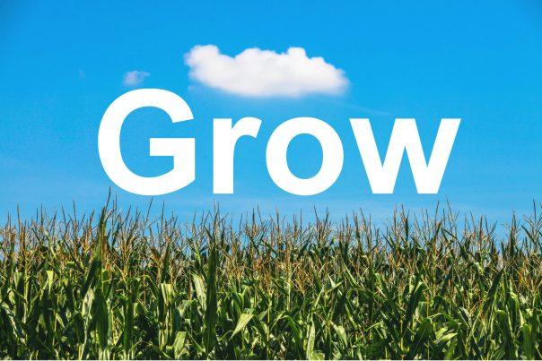 Grow - Cornfield blue sky (1)