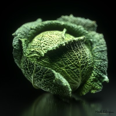 Cabbage_Savoi-Mark_Florquin-3D_Scan