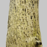 Weathered Tree Stump 3D Model Render Close Up