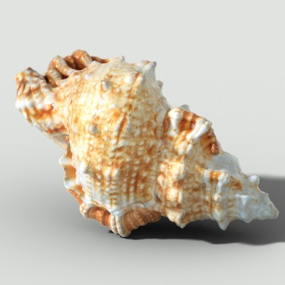 MURICIDAE Mollusk (4)_3-ocean-sealife-shell-sealife-photogrammetry-3D-model-OBJ-FBX
