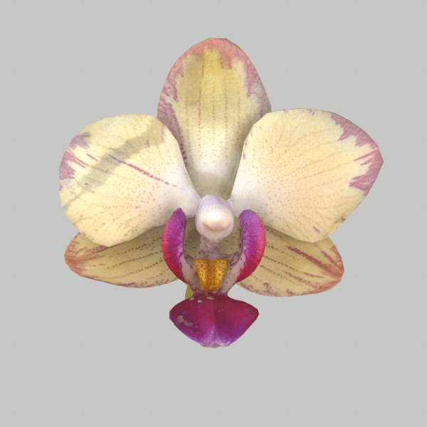 Orchid 5 Scanned by Marki Mark