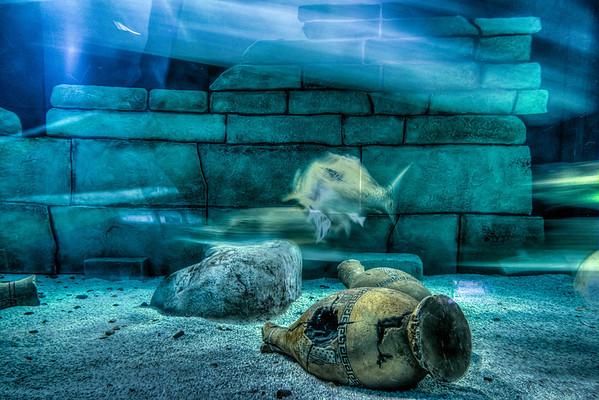 Fish, Ghost Fish, Sea Life Aquarium, Mall of America, Bloomington, Minnesota, HDR, Underwater