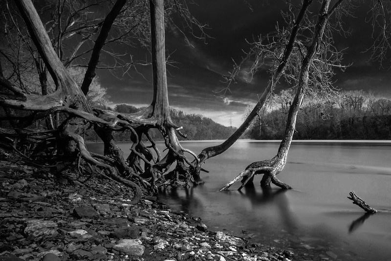Halloween, Spooky, Crawlers, Black and White, Moody, Creepy Trees
