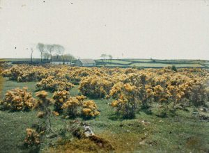 bog flowers
