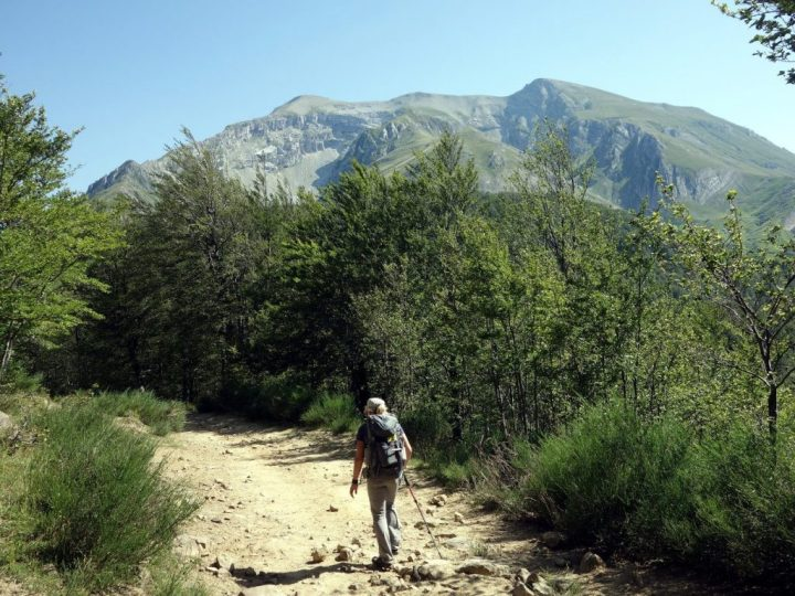 Monte Corvo from the north, on a trail through woodland