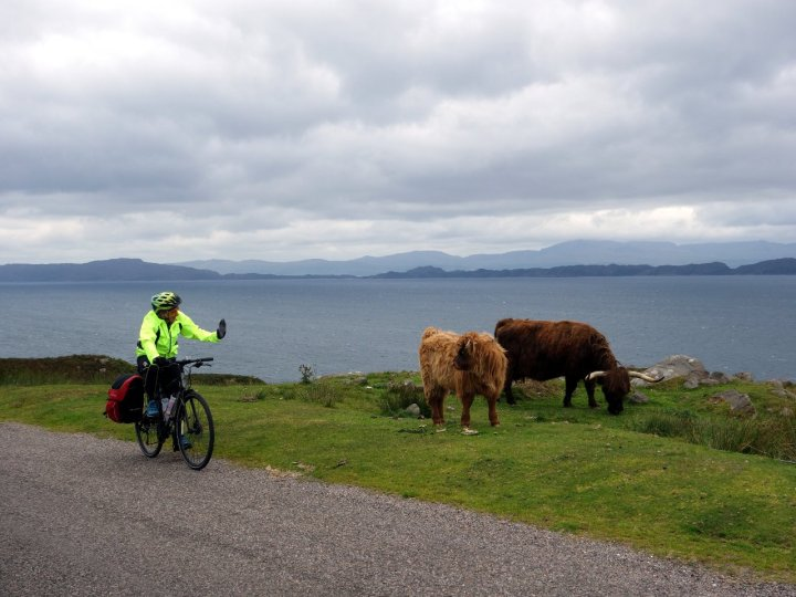 Highland cattle: you can wave, but for god's sake don't stop to take a photograph