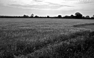 Some more Norfolk B/W experiments