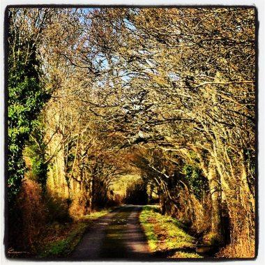 L'abri hockney tunnel