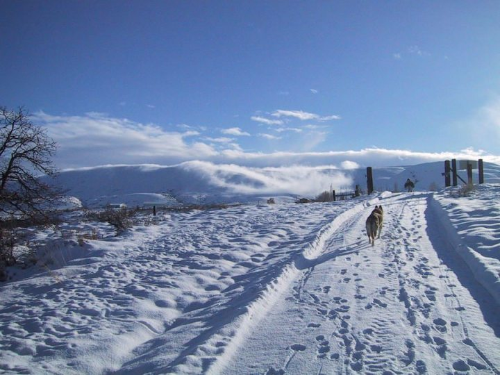 Lone_dog_walks_up_a_snow_covered_road
