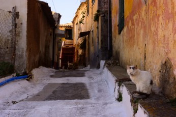 Corfu is full of cats. I believe there are four in this picture alone.