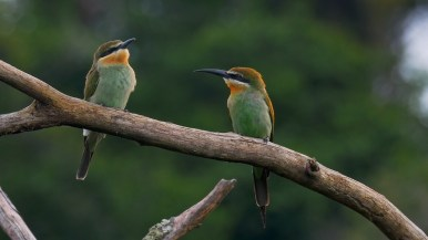 Madagascar bee eaters, a species that often frequents the zones near the edge of the forest. Photo by Duncan Parker.