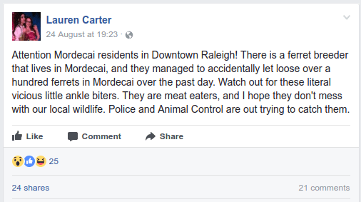 Lauren Carter24 August at 19:23   Attention Mordecai residents in Downtown Raleigh! There is a ferret breeder that lives in Mordecai, and they managed to accidentally let loose over a hundred ferrets in Mordecai over the past day. Watch out for these literal vicious little ankle biters. They are meat eaters, and I hope they don't mess with our local wildlife. Police and Animal Control are out trying to catch them.