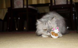 Weihnachtsgeschenk für unsere Katze (Foto: Markus Burgdorf)