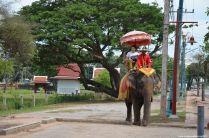 Ayutthaya Wat Phra Si Sanphet Elephant