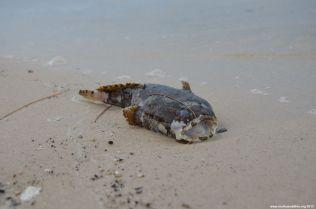 Hua Hin Fisch am Strand