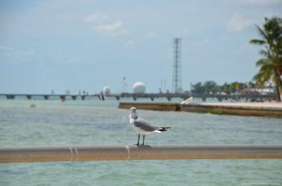 Möwe mit Blick auf die Naval Air Station Key West