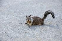 Squirrel im Yosemite Nationalpark