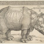 The Rhinoceros, Holzschnitt von Albrecht Dürer, The Metropolitan Museum of Art