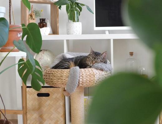chat-appartement-accessoire-panier-gamelle