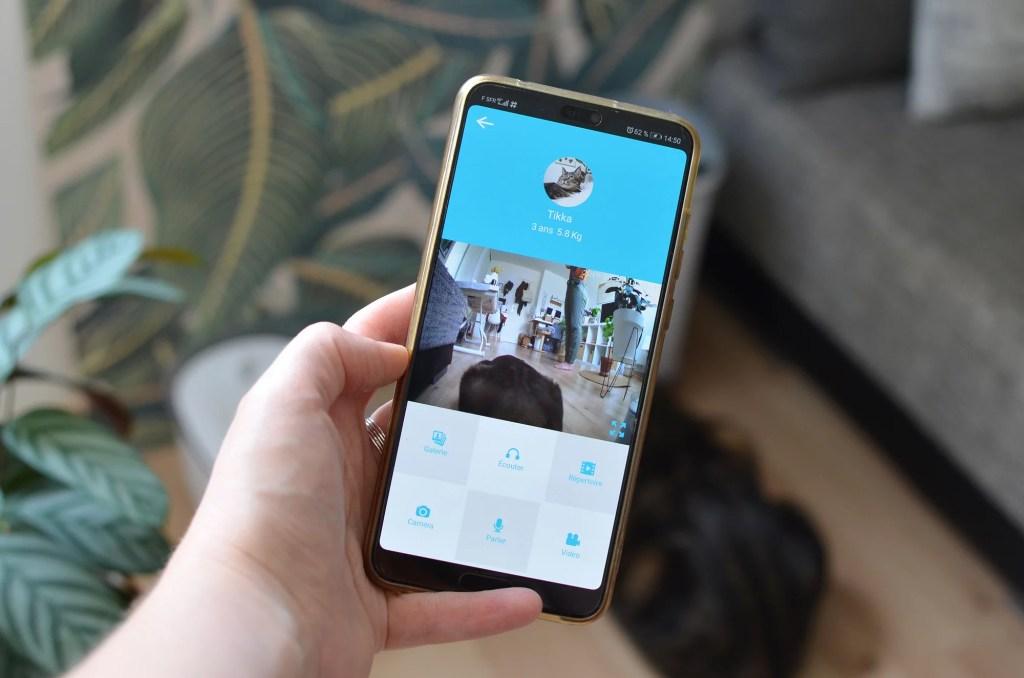chat appartement application mobile connectee 1024x678 - Tikka et Papaye, mes essentiels et conseils avec deux chats en appartement