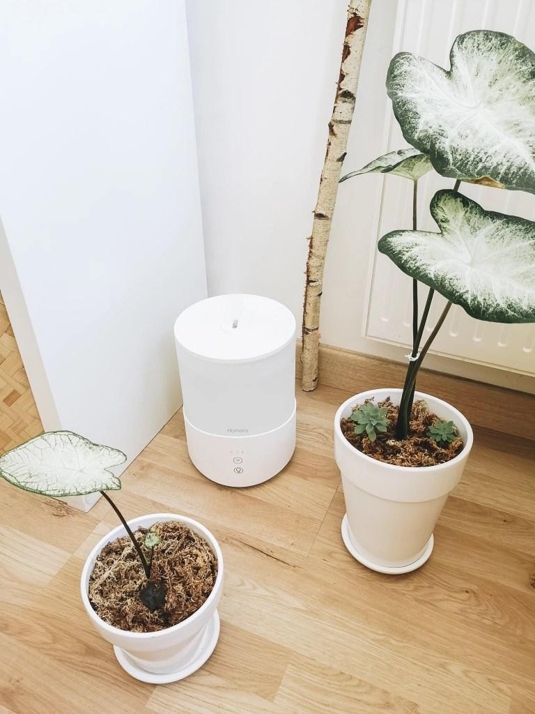 humidificateur air plante blanc marmille 768x1024 - Comment vivre les fortes chaleurs en appartement (chats et plantes)