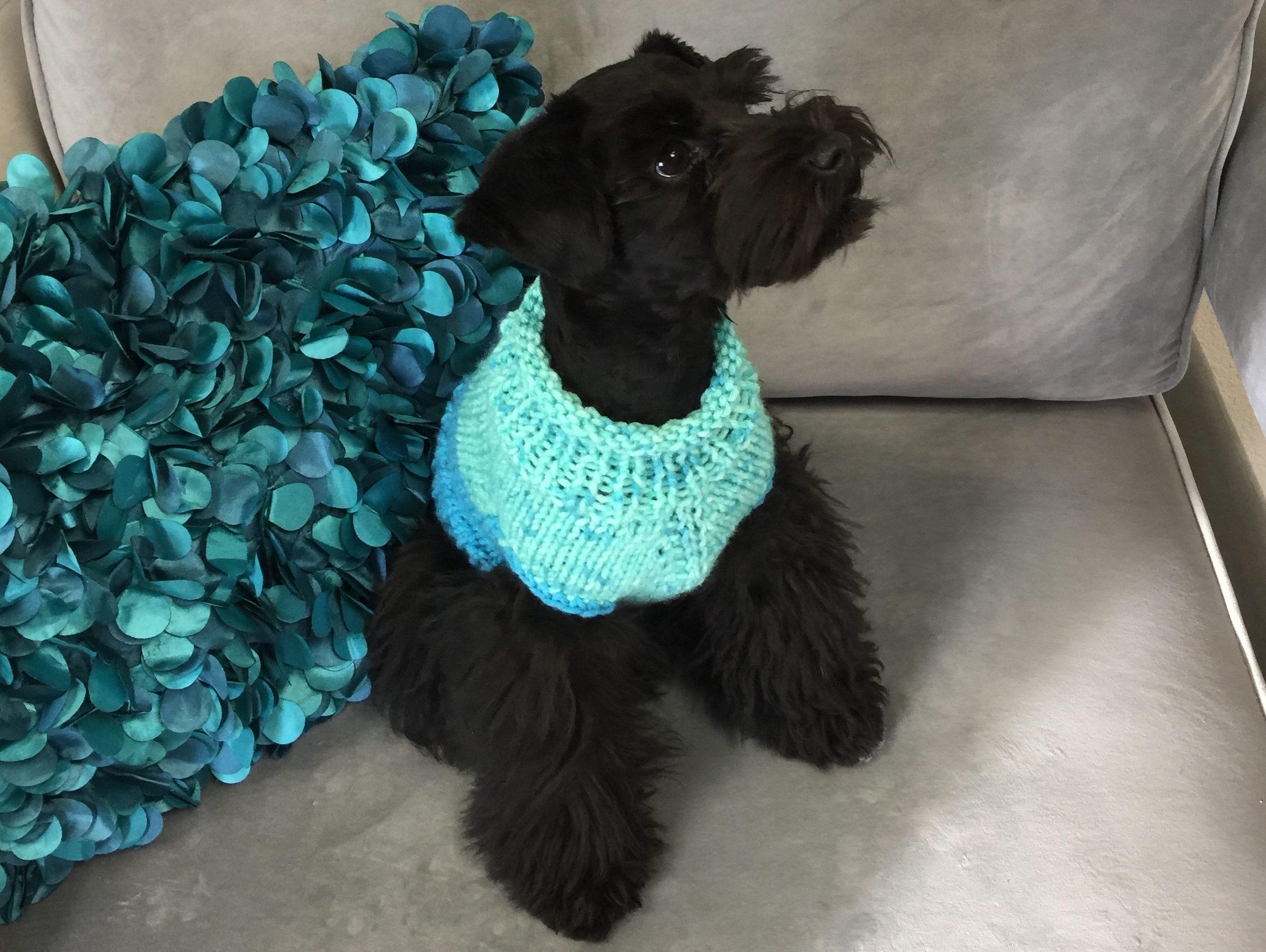 Bunny's Dog Sweater