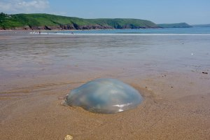 %name A Jellyfish? or a Breast Implant?