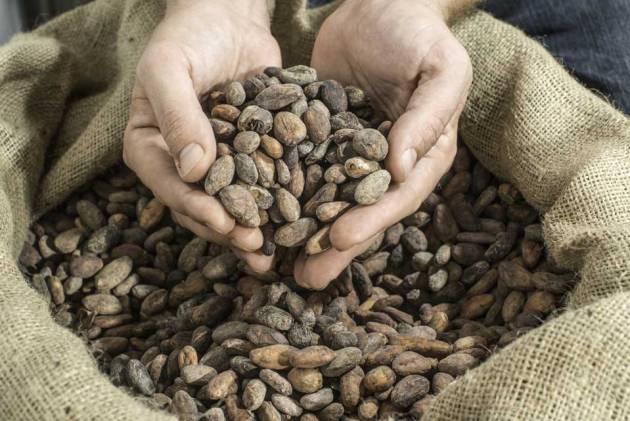 roasted-cacao-beans-photo