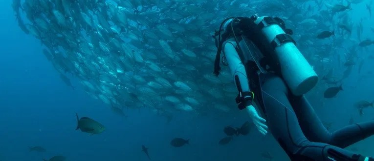 Man scuba diving by school of fish
