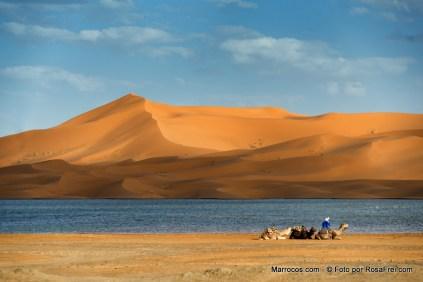 Dromedaries rest at the rain-filled lake near the Erg Chebbi sand dunes in Merzouga, Morocco.