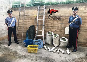 Rubano olive in un terreno di Campobello, arrestati
