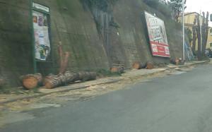 alberi-abbattuti-via-nazionale