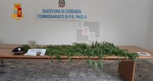 arresto marijuana paola