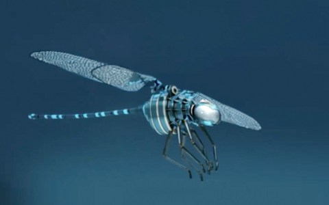 insectoid drone
