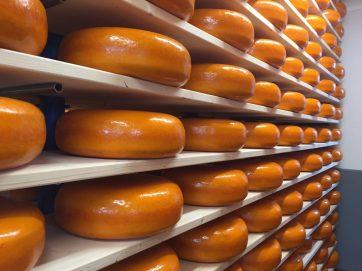 woerden kaasrondleiding