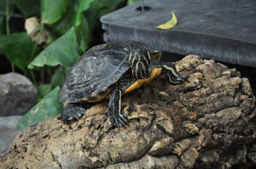 center parcs limburgse peel schildpad