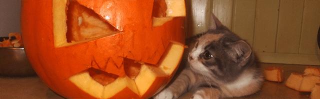 jak wykrawać dynię jak wyciąć dynię wycięta dynia kot kotek śmieszne halloween