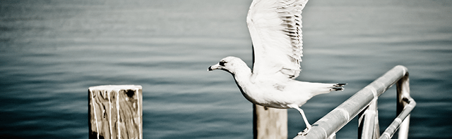 mewa odlatująca zdjęcie nad morzem fotografia