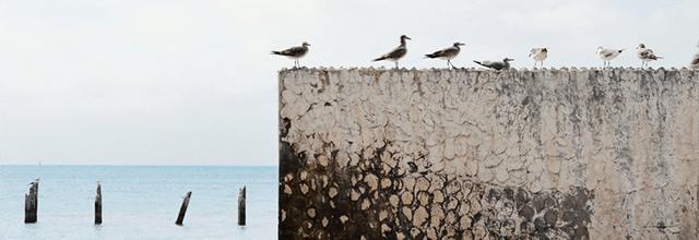 otywacja motywacyjne obrazki zdjęcia inspiracje cytaty jak spełniać marzenia dążyc do celu mewy morze wakacje woda jezioro ptaki
