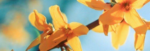 kwiat kwiatki kwitnące