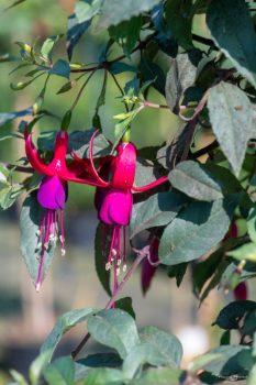 Des fleurs à Chèvreloup