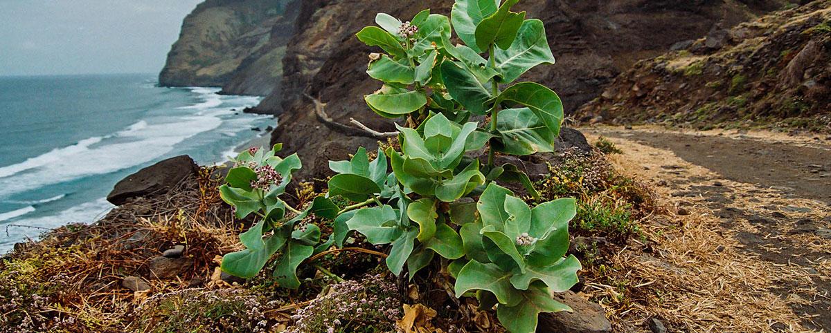 Kapverdy, Santo Antao, Cabo, Verde [Mart Eslem]