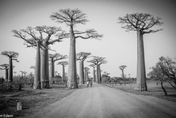 Madagaskar a Komorské ostrovy [Afrika]