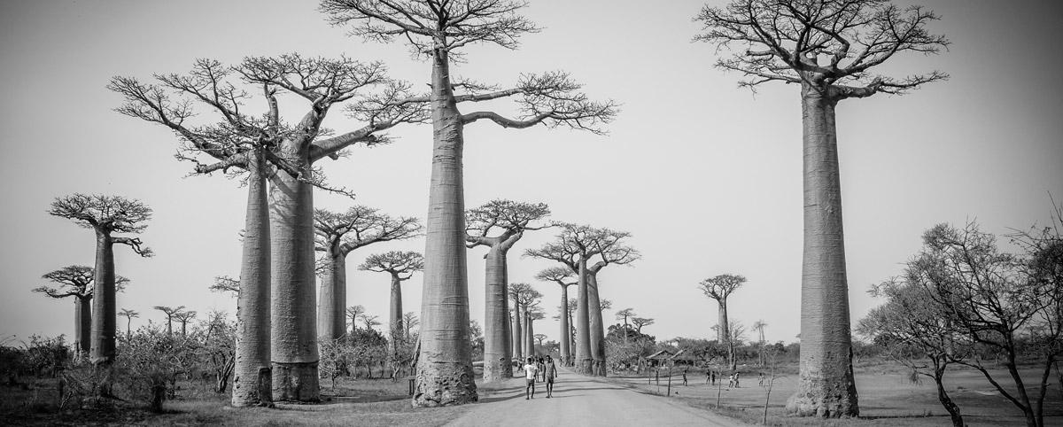 Deník 027 Madagaskar a Komorské ostrovy (2016)